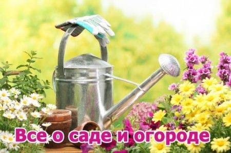 Обложка Все о саде и огороде - Сборник 120 книг (2014) FB2