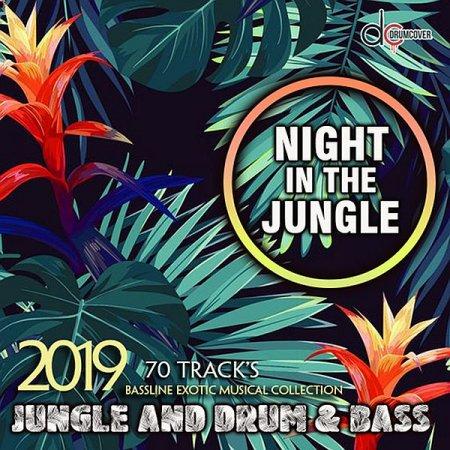 Обложка Night In The Jungle (2019) Mp3